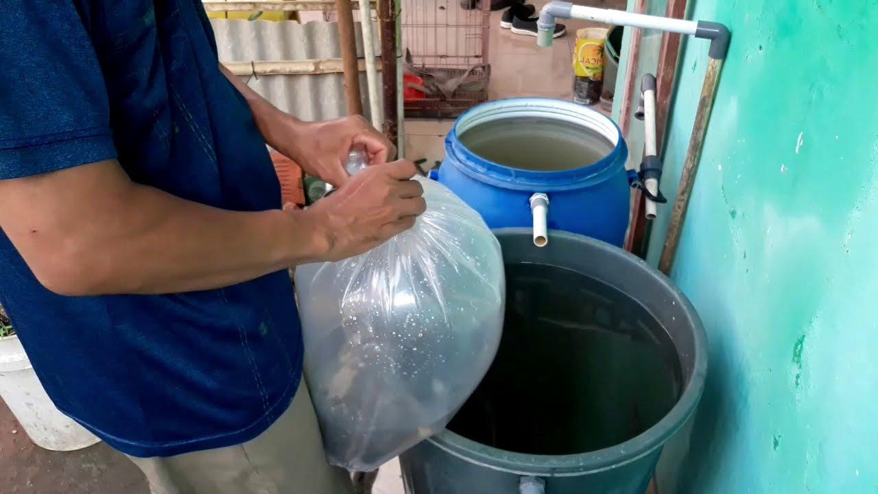 Budidaya Ikan Dalam Ember | BERSAMA Promol12 HNI HPAI ...
