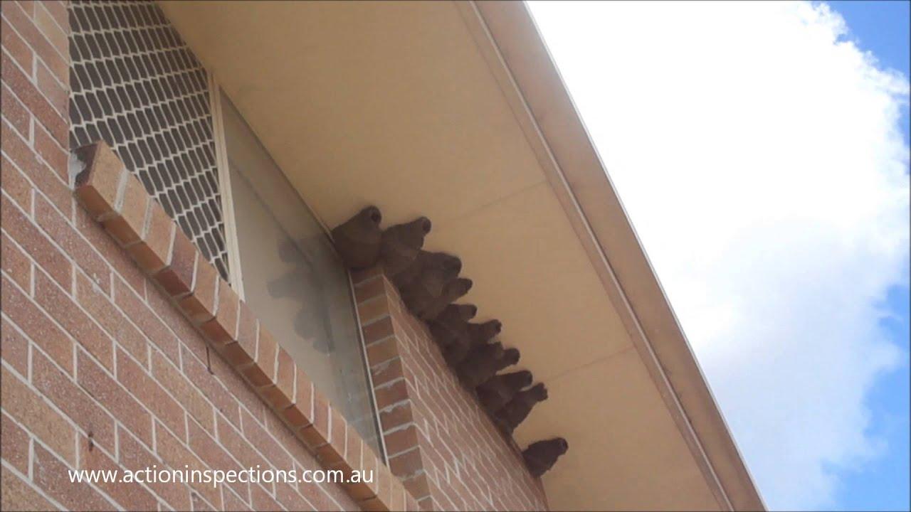 repair crack ceiling meets wall