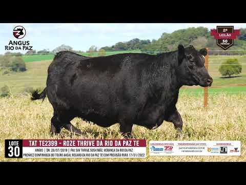 LOTE 30 TE 2399 ROZE THRIVE DA RIO DA PAZ TE - Prod. Agência e TV El Campo