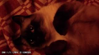 Оргазм кота
