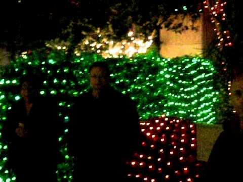 Botanical gardens christmas lights in largo florida dec - Florida botanical gardens christmas lights ...