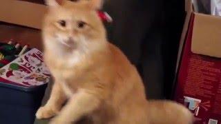 クリスマスなんて嫌いだぁあ!サンタの帽子をかぶせられ錯乱する猫