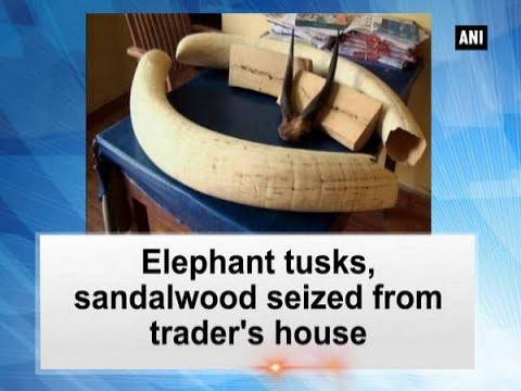 Elephant tusks, sandalwood seized from trader
