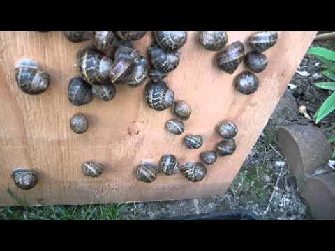 Micro snail farm