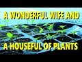 A WONDERFUL WIFE AND A HOUSE FULL OF PLANTS
