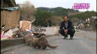 猫と河崎氏