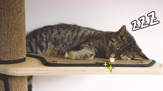 잠자는 고양이 앞에 간식을 놓아보았닼ㅋㅋㅣ꿀잼예약