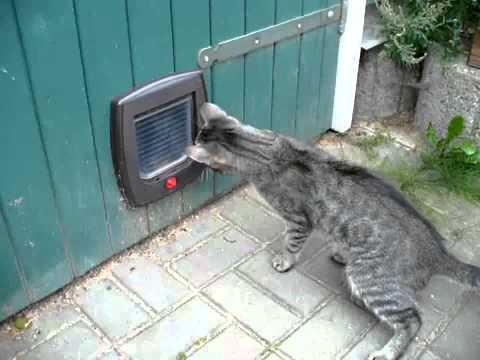 Kater attackiert Katzenklappe!