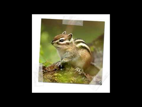 animales terrestres - photo #31