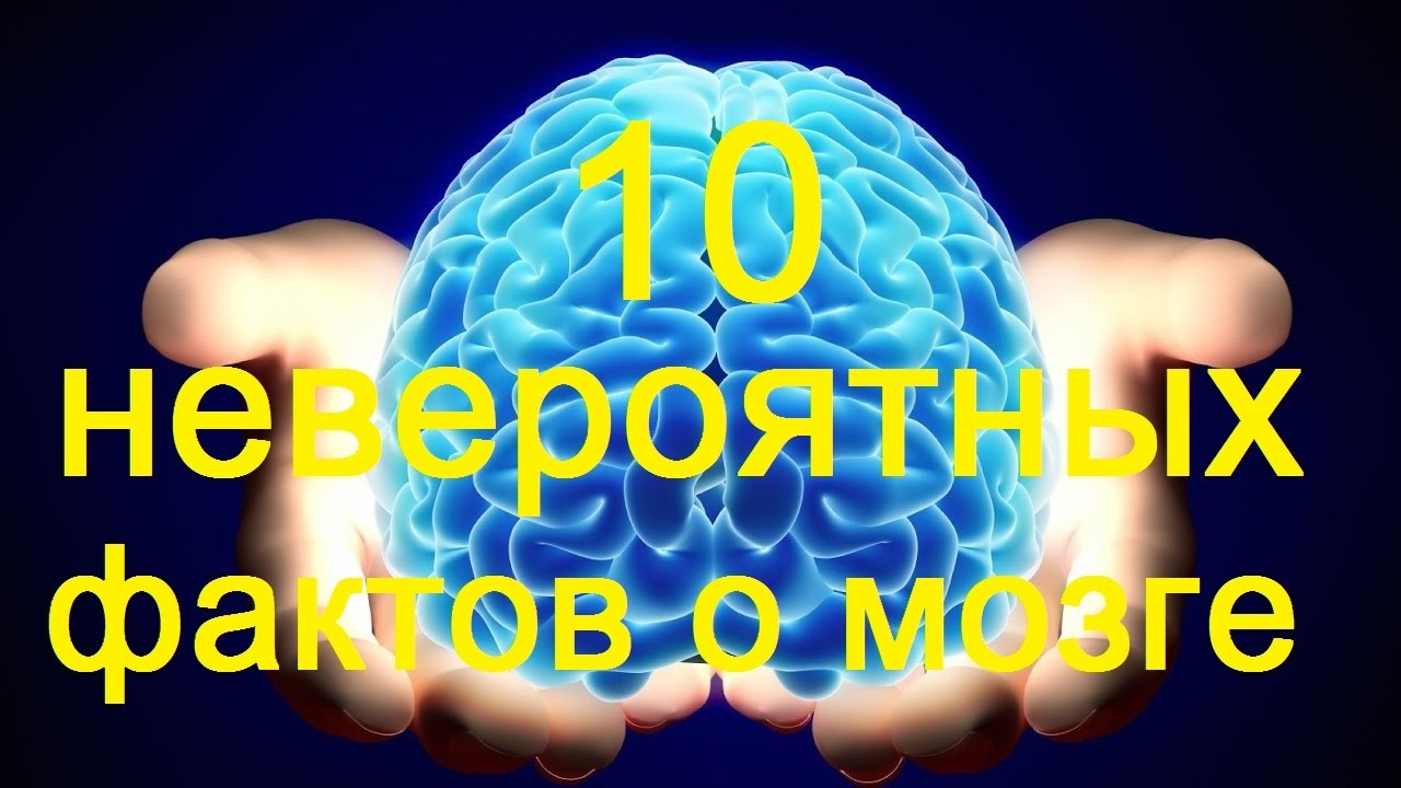 10 фактов о мозге неволе