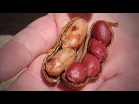 Peanut Recipe - Boiled Peanuts