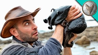 IT'S HUGE! Giant Black Slug! by : Brave Wilderness