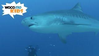 Die Insel der Haie | GEOlino-Reportage - Folge 46/50