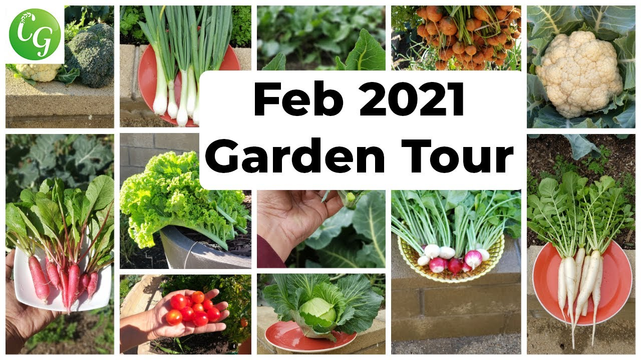 Feb 2021 FULL Garden Tour - Harvests, Gardening Tips, Things To Do & More!