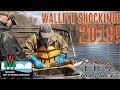 Shocking Walleye With the Wisconsin Department of Natural Resources!