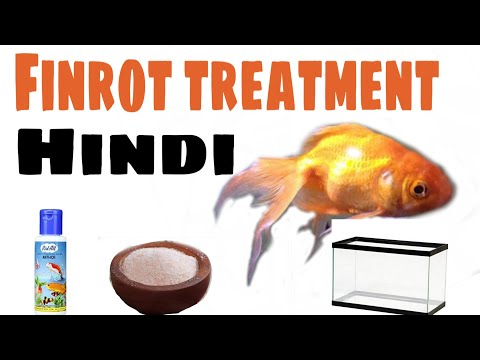 Fin Rot Treatment For Gold Fishes And Other Fishes