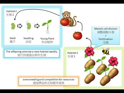 DSE Bio 營養繁殖精讀班 Vegetative Propagation Intensive
