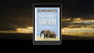 Perfect Wildlife Safari Guide   Porini Camps