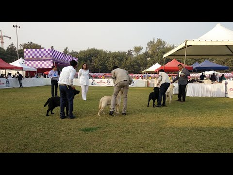 Poona Dog Show 2019 || 2019 Pune Dog Show || Poona Kennel Confederation  || Ladies Dunia