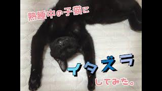 熟睡中の猫にいたずらしてみた!(爆笑)