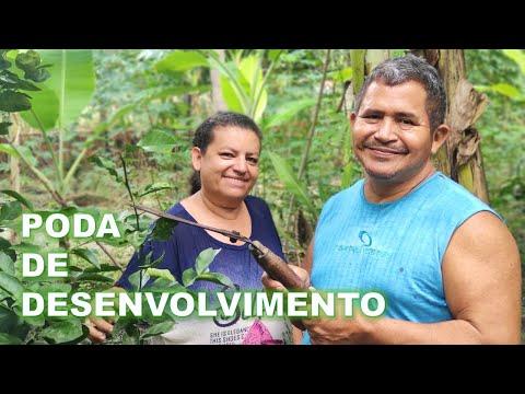 poda-para-desenvolvimento-das-nossas-laranjeira,-supotizeiro-e-jabuticabeira