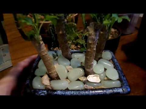 Трава, деревья и суккуленты