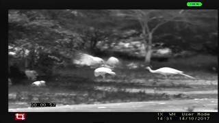 Tonbo Thermal Imaging Daroji Film