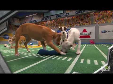 Puppy Bowl IX: A Year of Excessive Cuteness | Puppy Bowl IX
