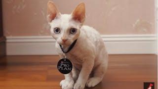 Как ухаживать за котенком (чем кормить котят)?