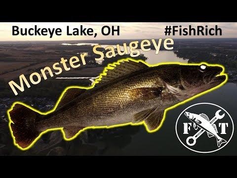 Early October 2019 Massive Saugeye On Buckeye Lake, OH