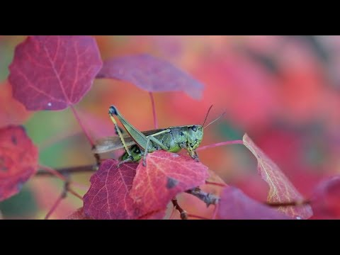 Наша Сибирь HD: Осень
