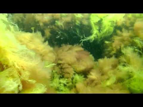 dyk i Klintholm Havn 1