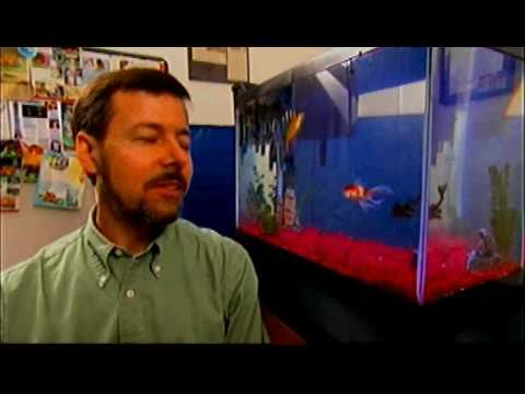 Comet the World's Smartest Goldfish on Animals At Work