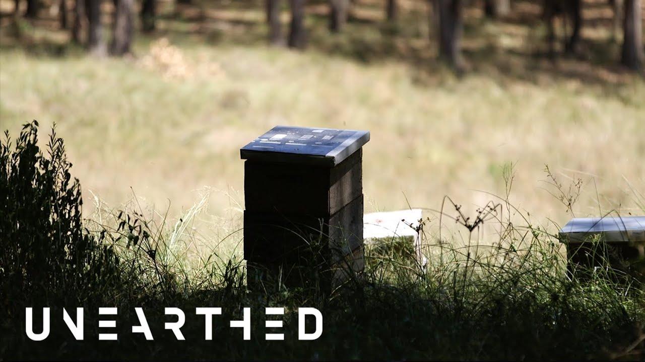O que está matando milhões de abelhas no Brasil?