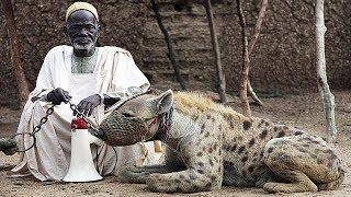 أشرس الحيوانات المنزلية على وجه الارض!!