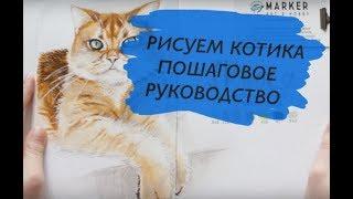 Как научиться рисовать кота (по шагам)(Учимся быстро и легко рисовать кота (поэтапный видеоурок) В этом видео использовались: Маркеры ZIG Art&Graphic..., 2016-07-10T13:08:57.000Z)