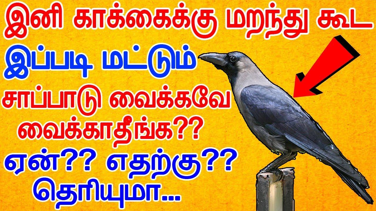 காக்காவுக்கு சோறு வைக்கும் முன் இந்த வீடியோ பாருங்க | keep food to crow in morning