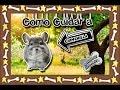 watch he video of Chinchilla  Los reodores más dociles e inteligentes  (Roedores)  Cuidados de mascotas 