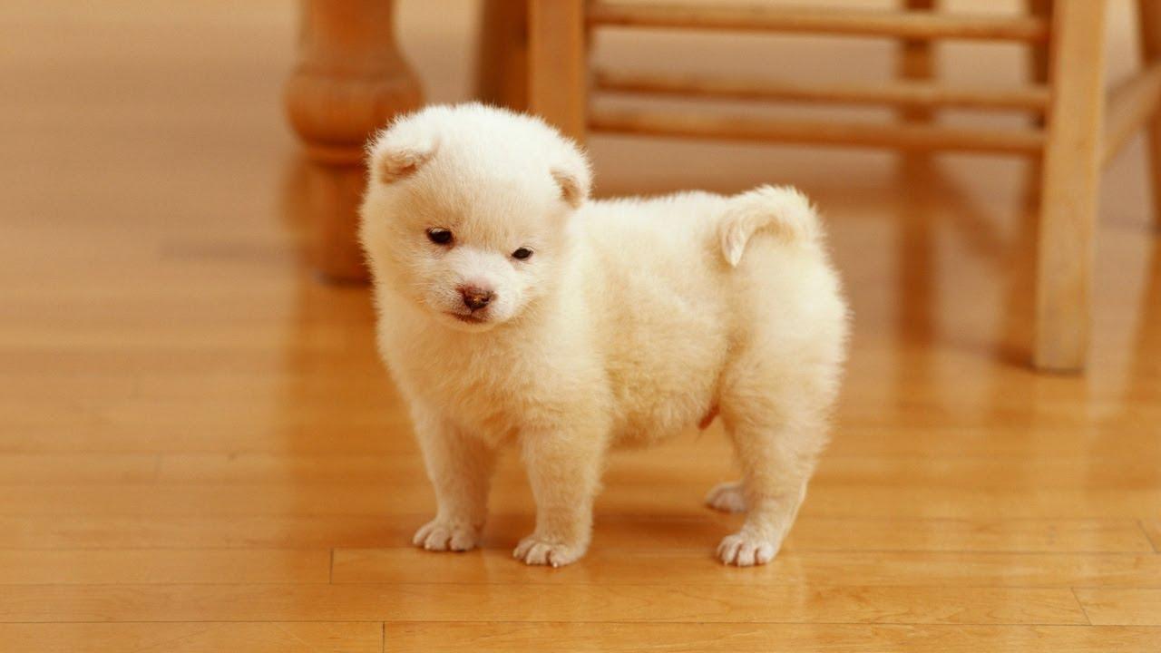 White Puppy Dog Sleeping With Teddy Bear So Cute - YouTube
