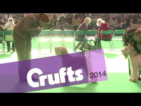 Best of Breed | Wheaten Terrier | Crufts 2014