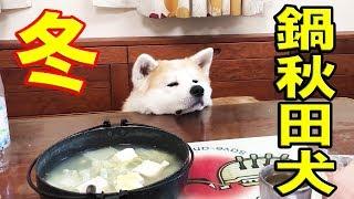 秋田犬惣右介君 冬は鍋が似合います 今日も散歩も行かず朝から鱈チリ鍋...