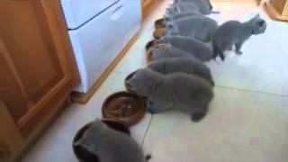 Количество котят на видео зашкаливает! / Number of kittens on video rolls over!