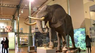 Museo Nacional de Ciencias Naturales - Museums: Visualizing Spanish Exhibits (eng)