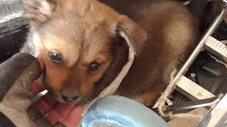 好可怜的小土狗,当我给它喂了两根火腿肠后,结局却让人哭笑不得cute dog