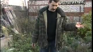 Байки Владимира Виноградова, вырезанное, часть первая