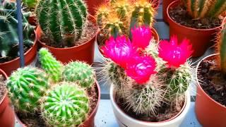 Комнатные цветы.Самые дорогие декоративные растения🍀