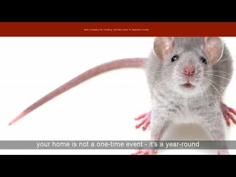 Best Company For Treating Termites Gone In Highland County