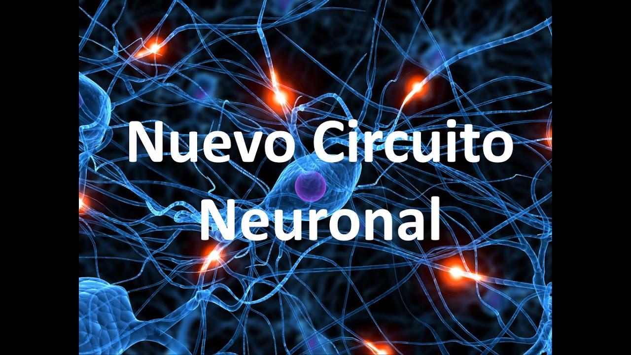 Circuito Neuronal : Nuevo circuito neuronal youtube