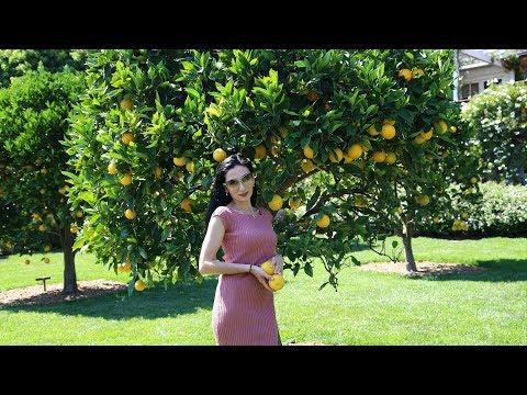 Heghineh Family Vlog #43 - San Ysidro Ranch - Heghineh Cooking Show