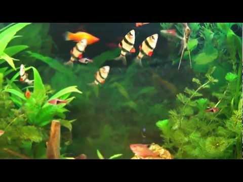 poisson aquarium eau douce il nostro primo acquario stupendo sono nati i pesciolini doovi. Black Bedroom Furniture Sets. Home Design Ideas